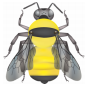 illustration of the yellow bumble bee, Bombus fervidus. Black on top and front of head. Thorax yellow with black band between wings. Abdominal T1 to T4 yellow, T5 and T6 black.