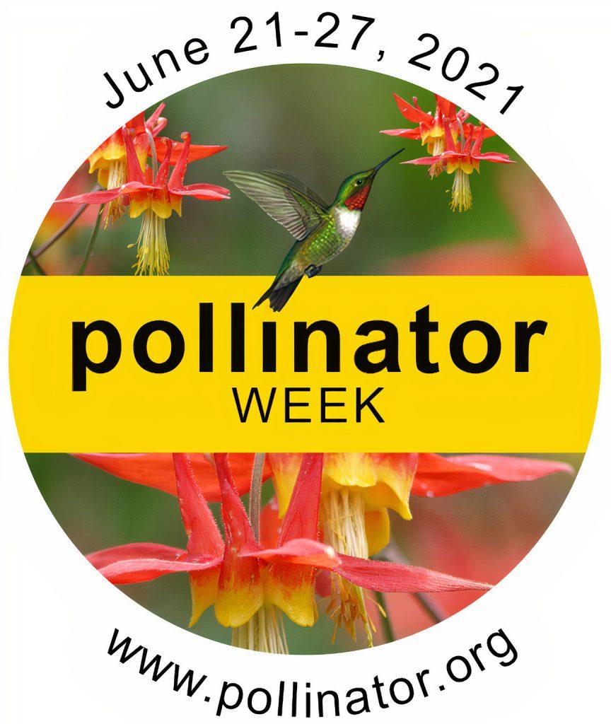 pollinator week logo of hummingbird at red columbine flower